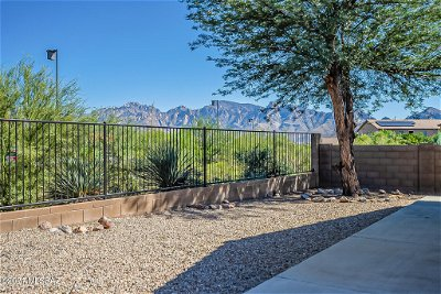 Oro Valley Single Family Home For Sale: 13068 N Desert Olive Drive