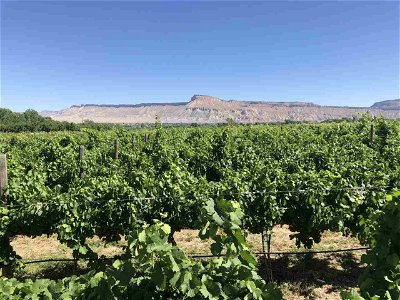 Palisade CO Residential Lots & Land Pending: $425,000